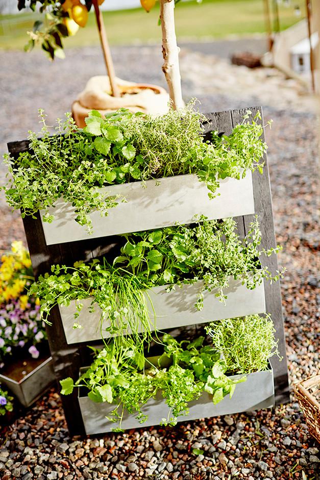 Växtvägg - steg för steg